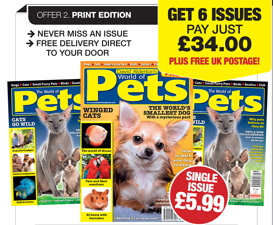 Guideline Publications World of Pets  Subscribe 6 issues for just £34.00