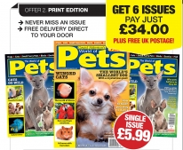 Guideline Publications World of Pets  Subscribe